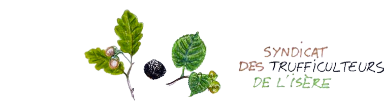 Truffes38 logo